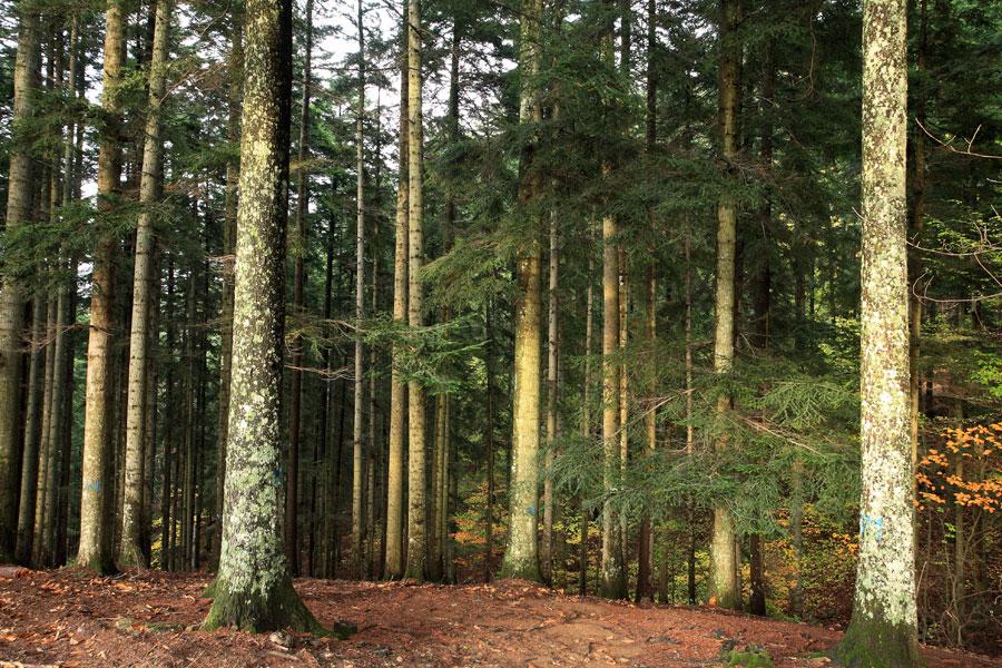 Foreste Casentinesi cosa vedere vicino arezzo